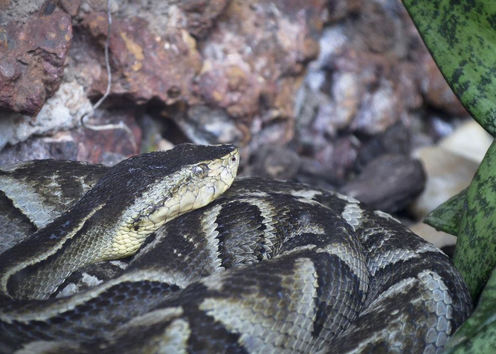 cobra (bela e apavorante) by Wilson Silva
