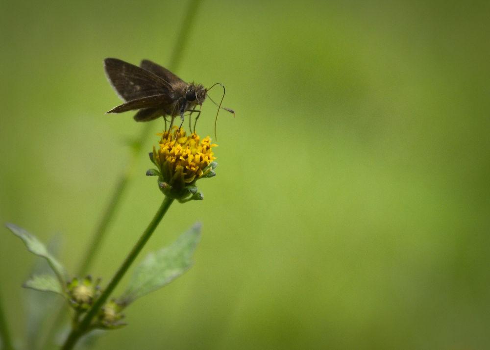 pequena borboleta by Wilson Silva