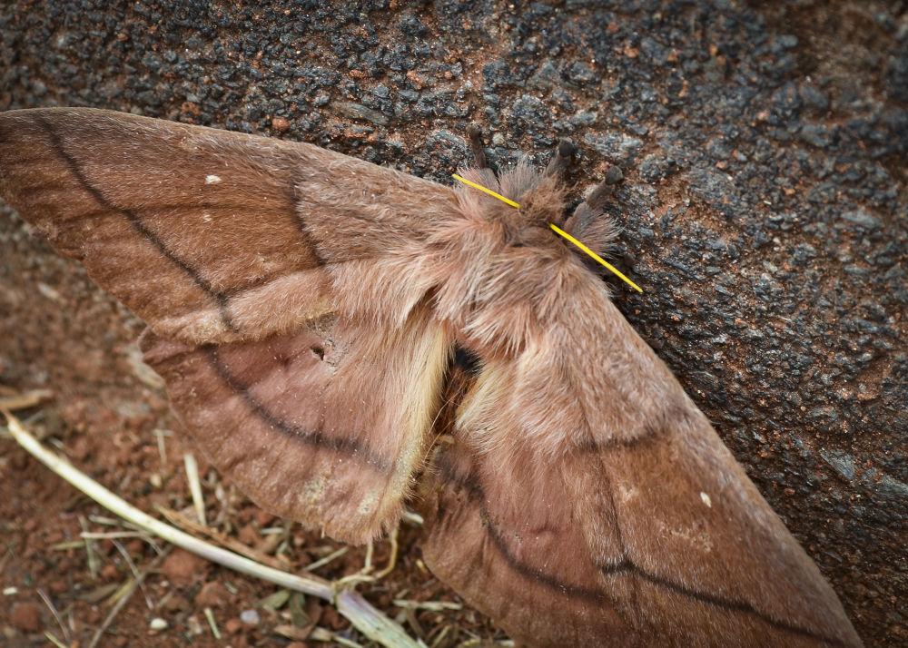 grande mariposa by Wilson Silva