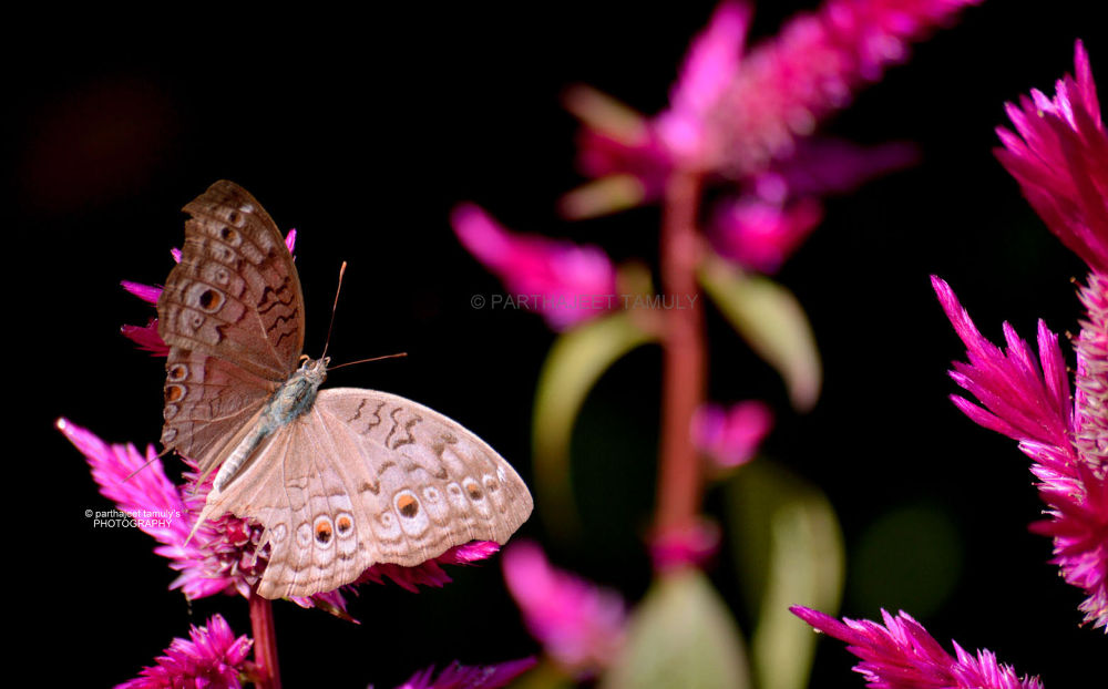 Butterfly .... in nature  by parthajeettamuly
