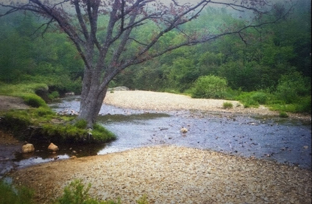 Yellow-Prong-Creek by sandlapper42