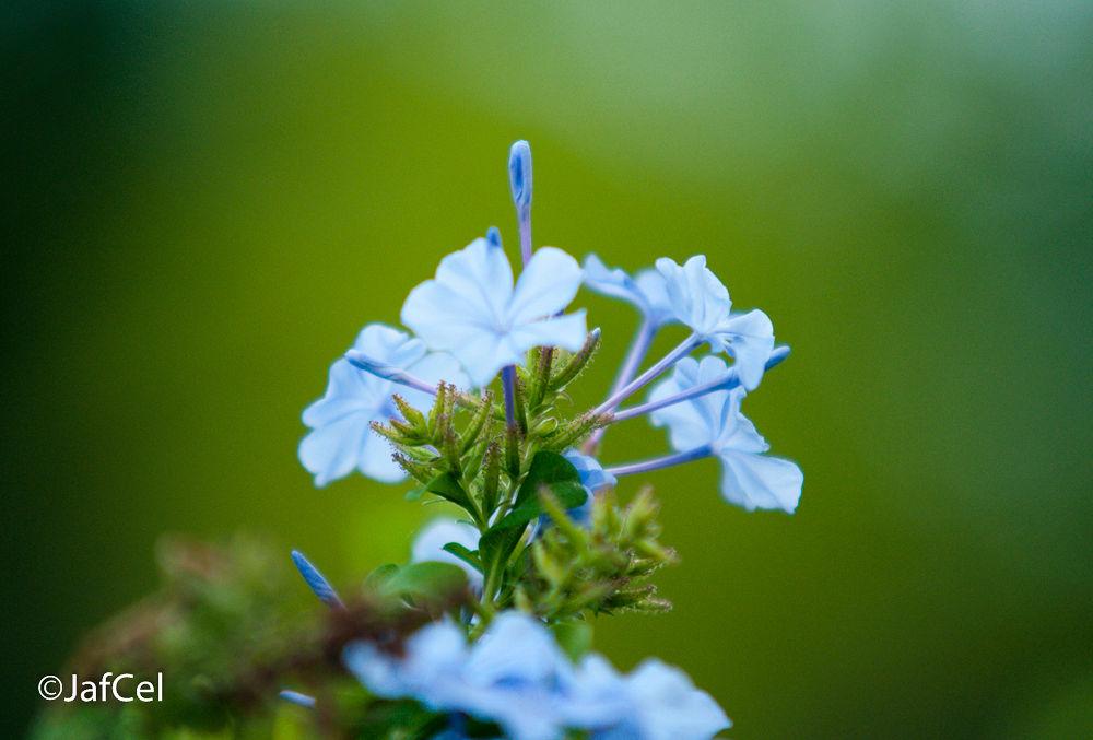 blue by josealchiercarilimdilimanfelomino