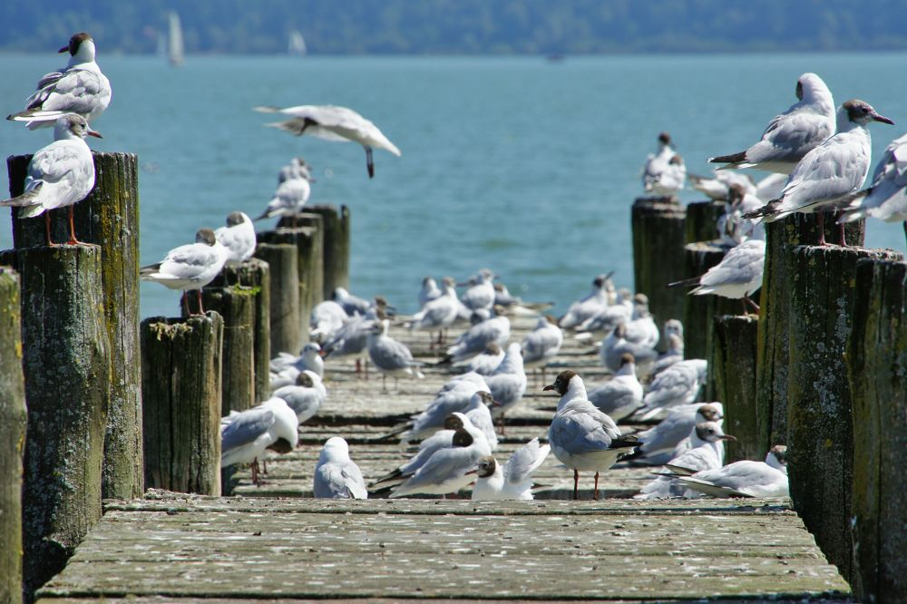 Am Ammersee by Patrick Teising