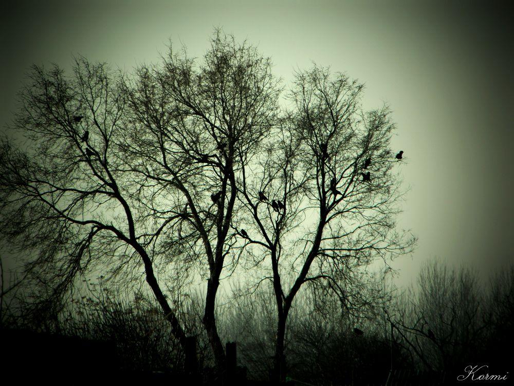Ravens by Kormos Alexandra