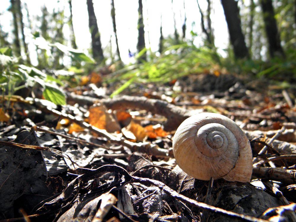 snail. by Kormos Alexandra