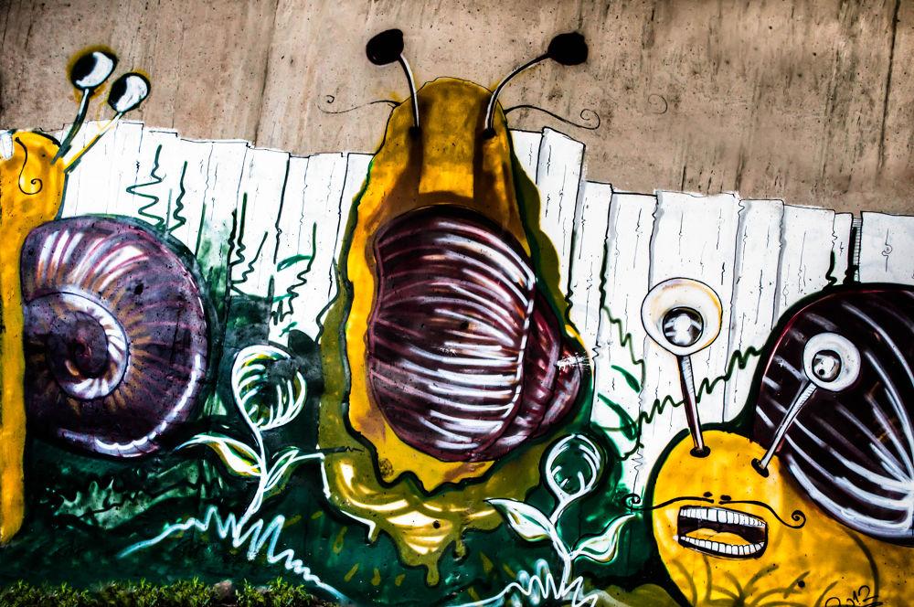 Photo in Still Life #snail #drawing #graffiti #wall