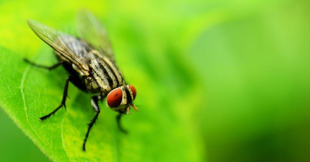Eye of fly by ebin baby