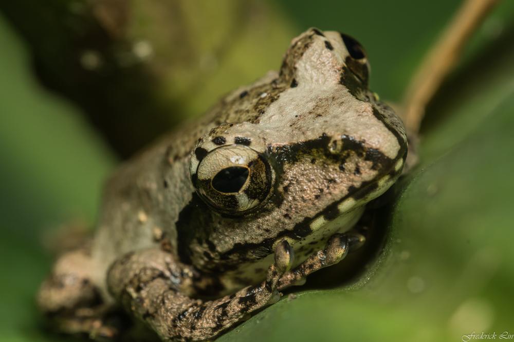 Photo in Animal #amphibia