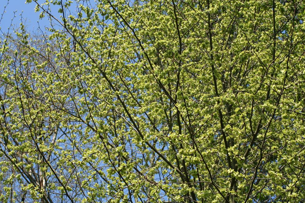 Spring by Malmros