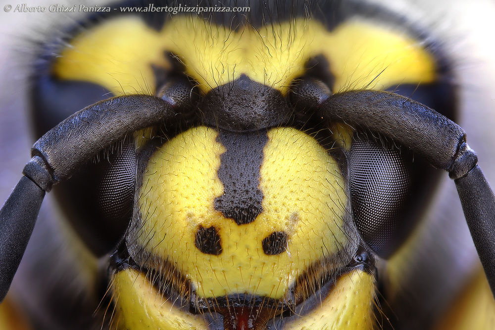 Wasp's Eyes by Alberto Ghizzi Panizza