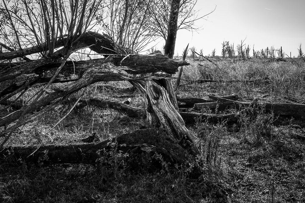oostvaardersplassen 3 by FotoBeeldVerhaal