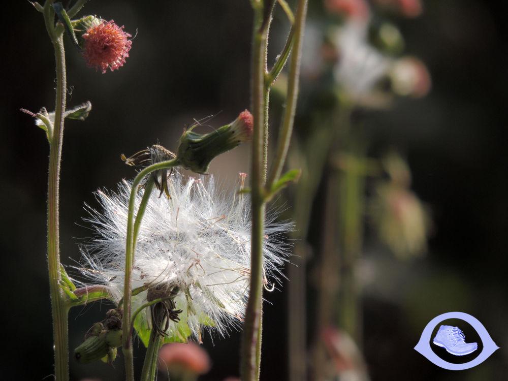 Flower by Sujan Shrestha
