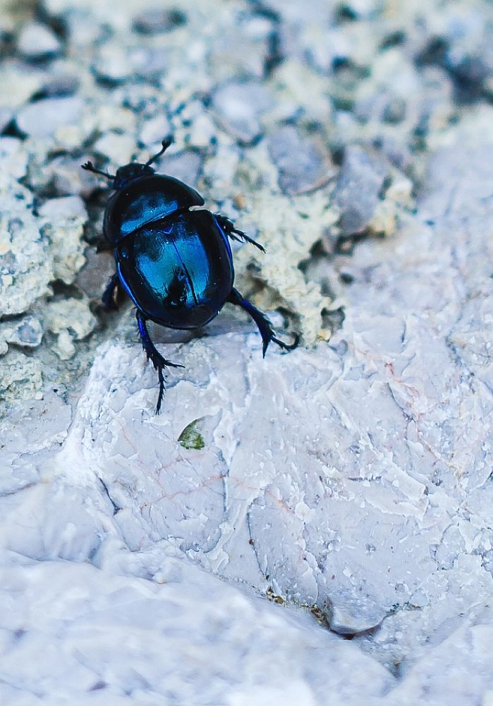 Blue bug by dnyphoto
