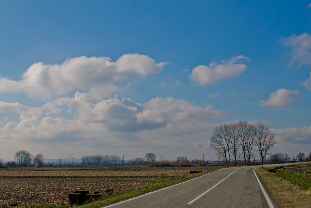 trees by giovannigphotos