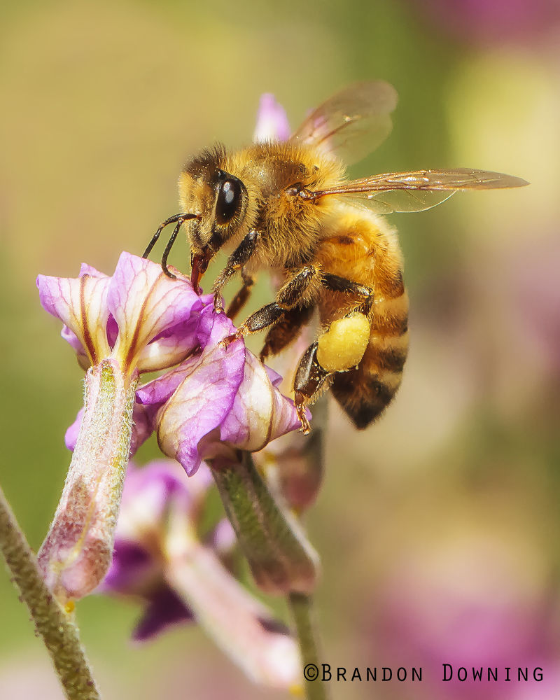 bee by brandondowning376
