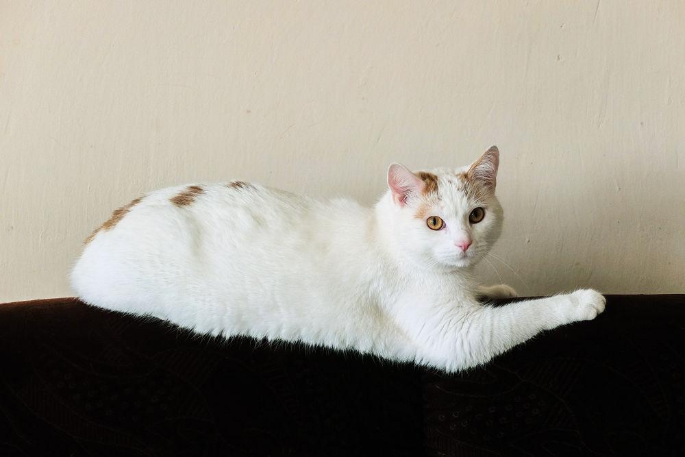 Tomcat Called Doggie by Vlado Elias