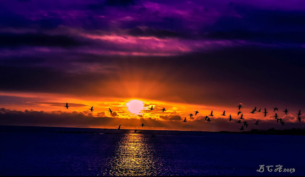 Brent Geese 1st light by clarkeanderson1957