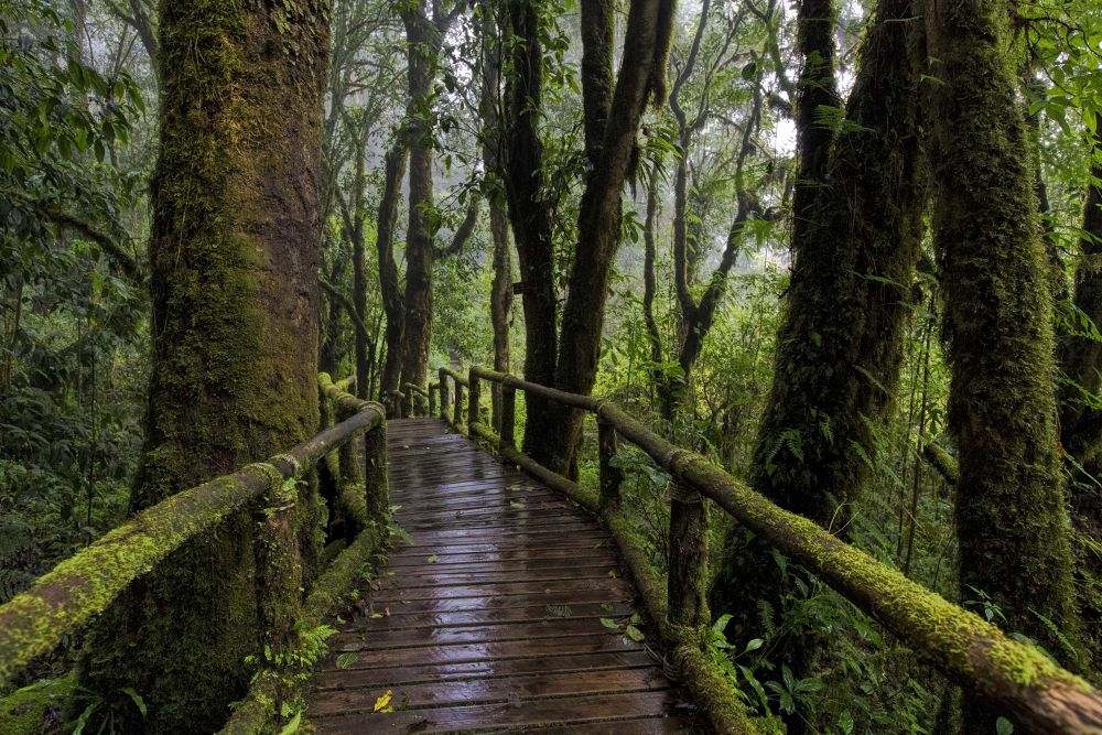 "Doi Inthanon National Park - ""The Roof of Thailand"". by Faroe Islands Hiking"