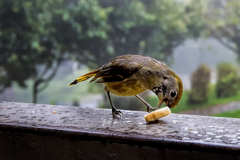 Hungry Bird by Faroe Islands Hiking