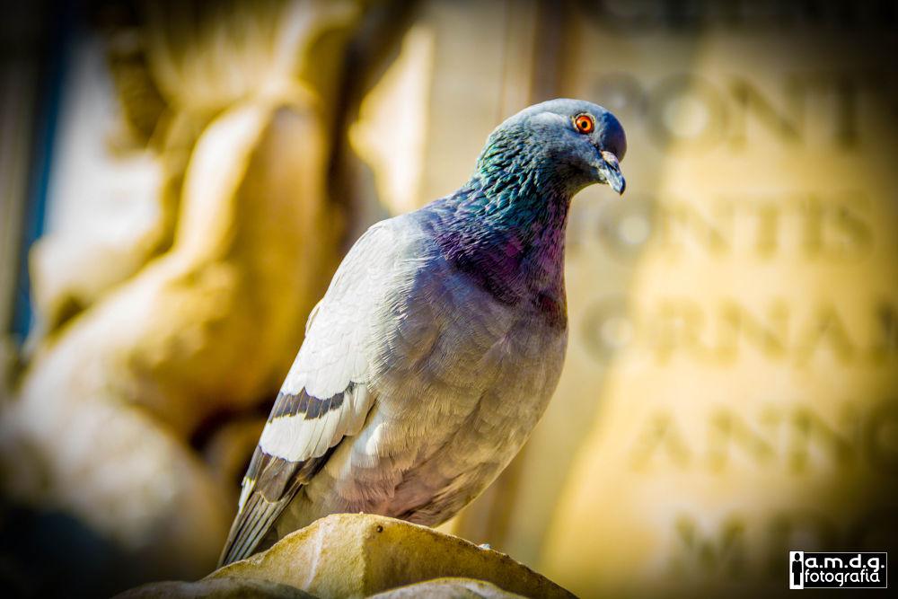 bird by maki li limos
