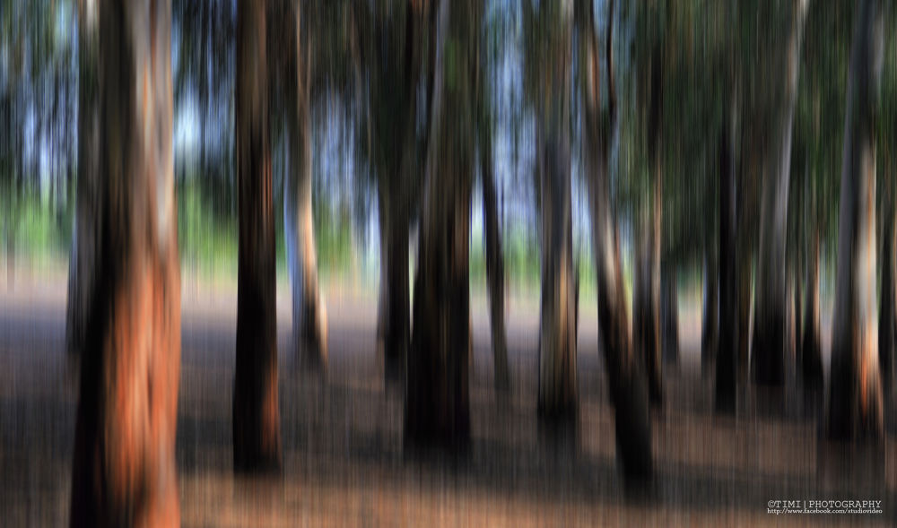 Creative blur by timiphotography