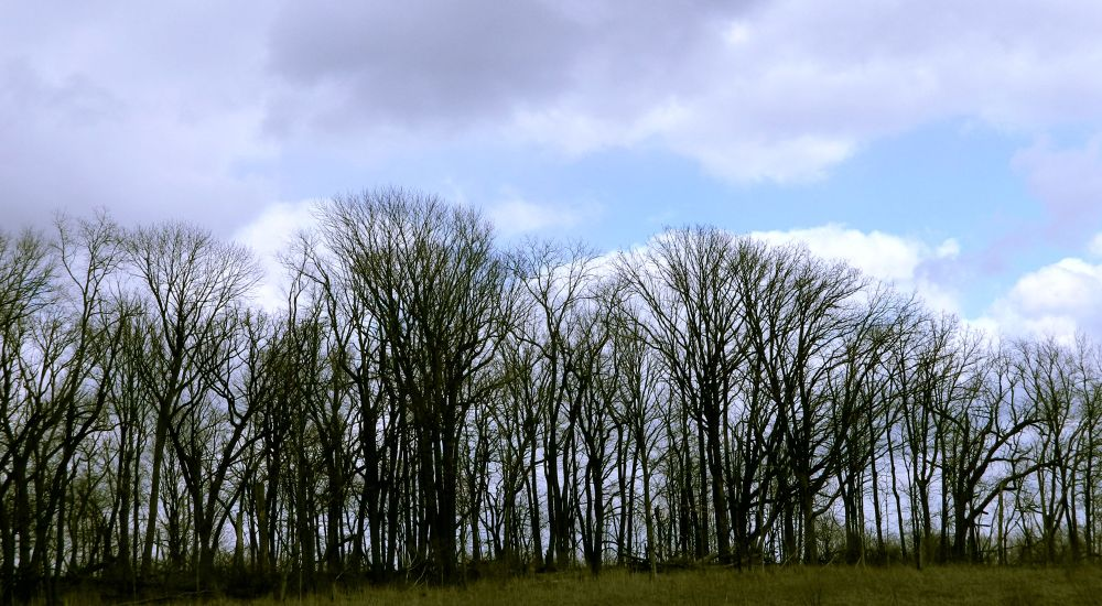 Tree Line by AMD Images