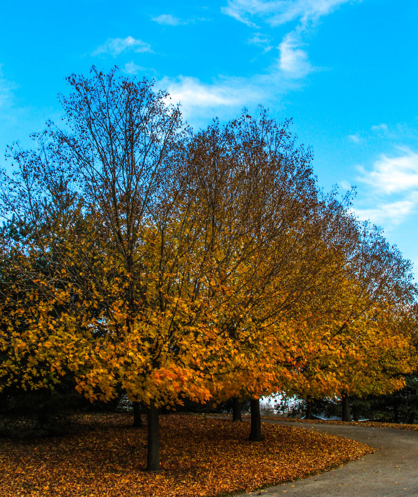 Beautiful Fall trees by AMD Images