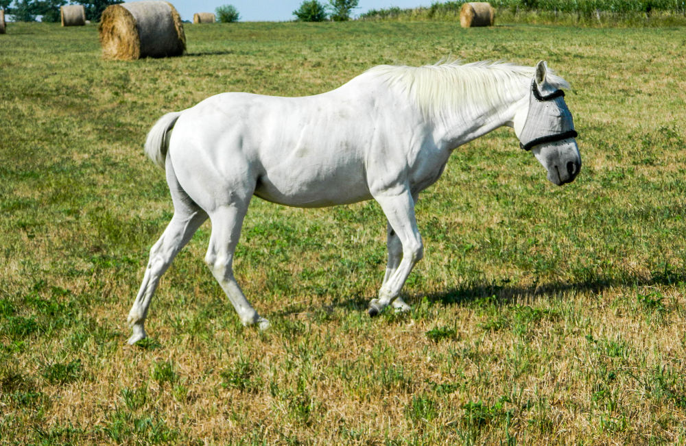 White horse by AMD Images