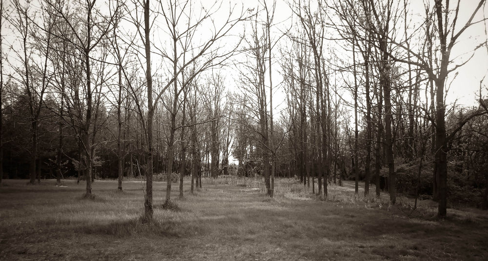 Photo in Nature #acres #land #tress #nature #homestead #country