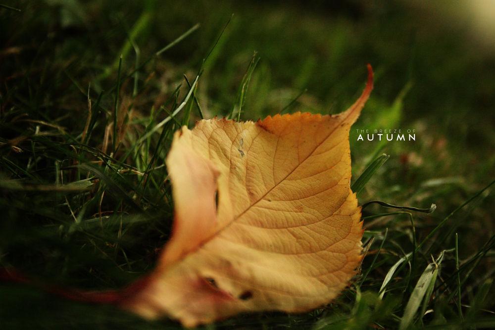 Autumn Breeze by Naseer Qureshi