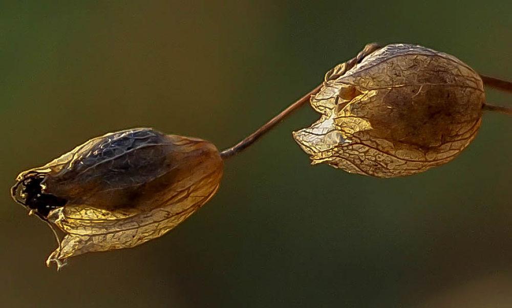 Herbstblume by Petra Taenzer