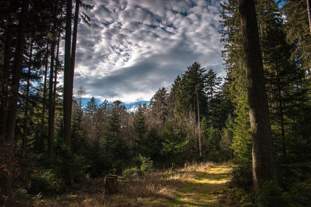 Im Wald by Petra Taenzer