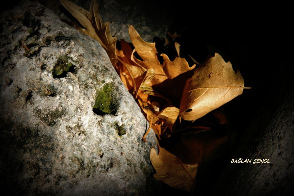 Autumn... by baglan senol