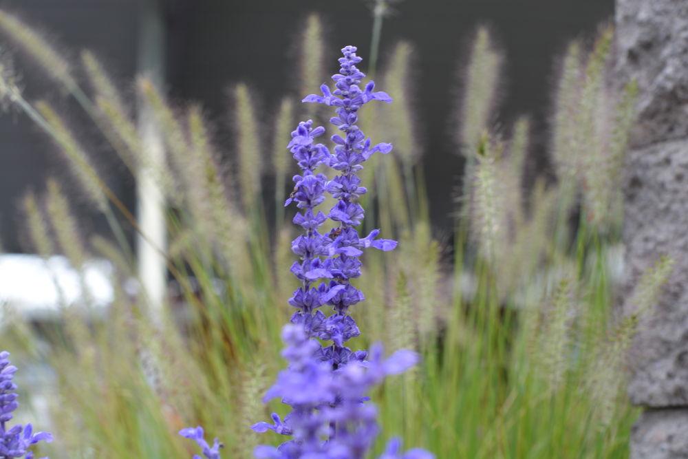 Purple! by Aaron