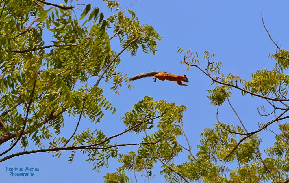 Esquilo - Costa Rica by Henrique Wiering