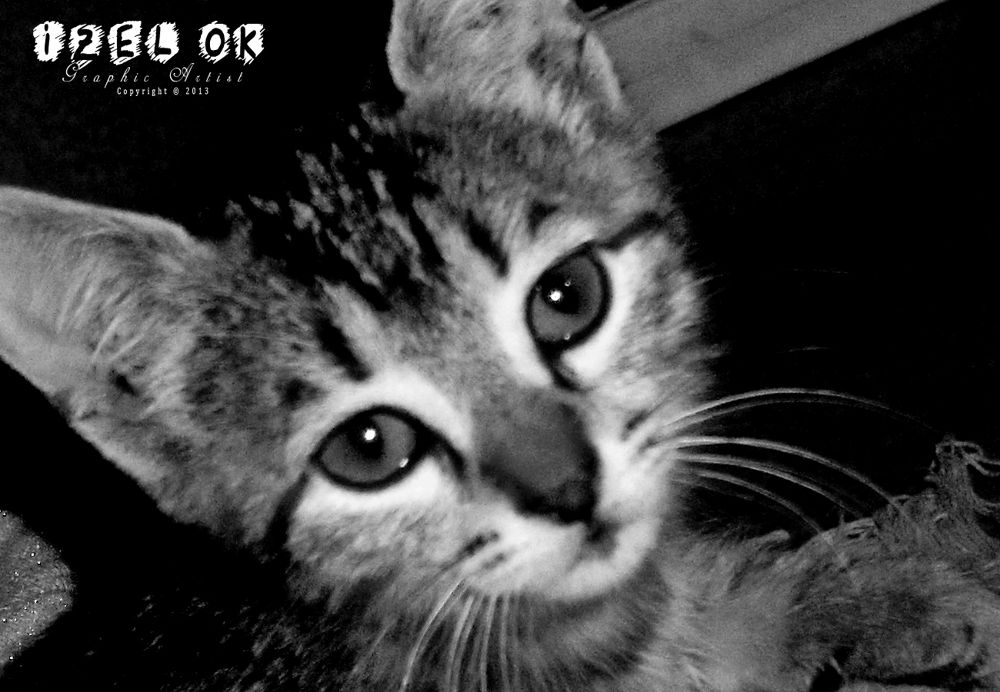 ''Boncuk The Kitty'' Photograph By: IZ OA (Copyrights©) by IZOA