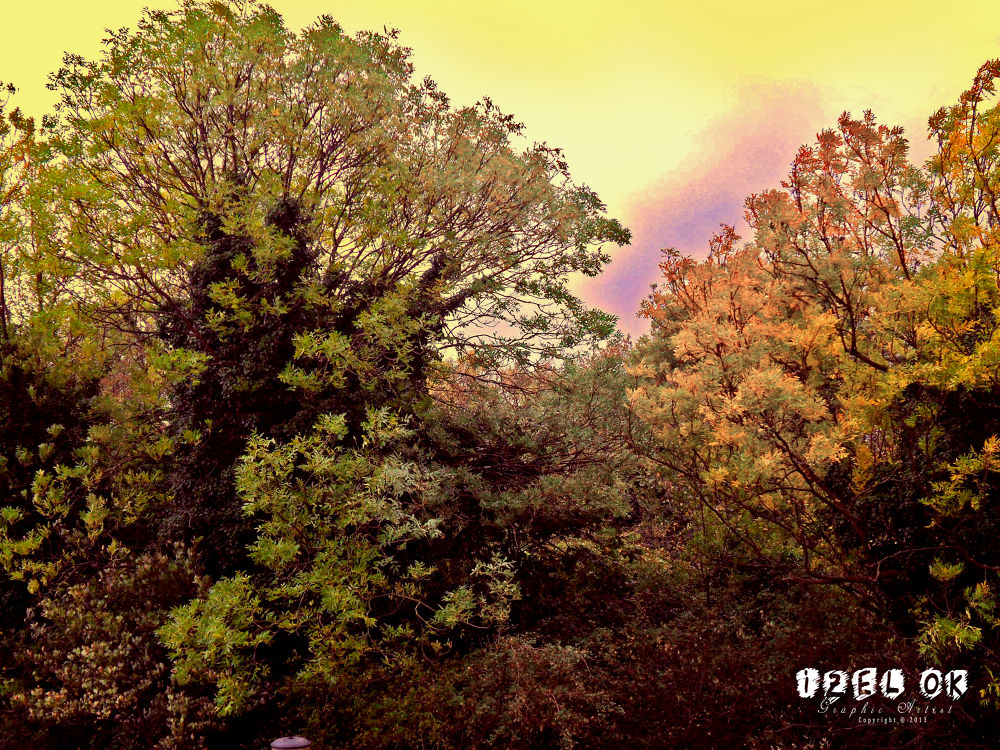 ''Forrest'' Photograph By: IZ OA  by IZOA