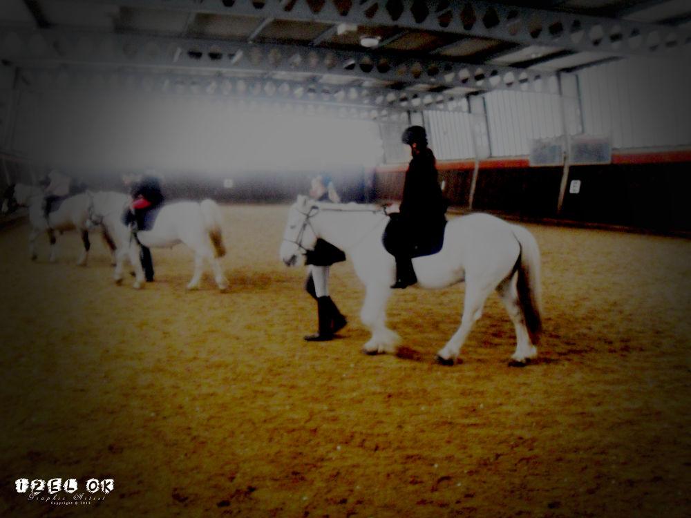 ''Morning Horses'' Photograph By: IZ OA 2013 by IZOA