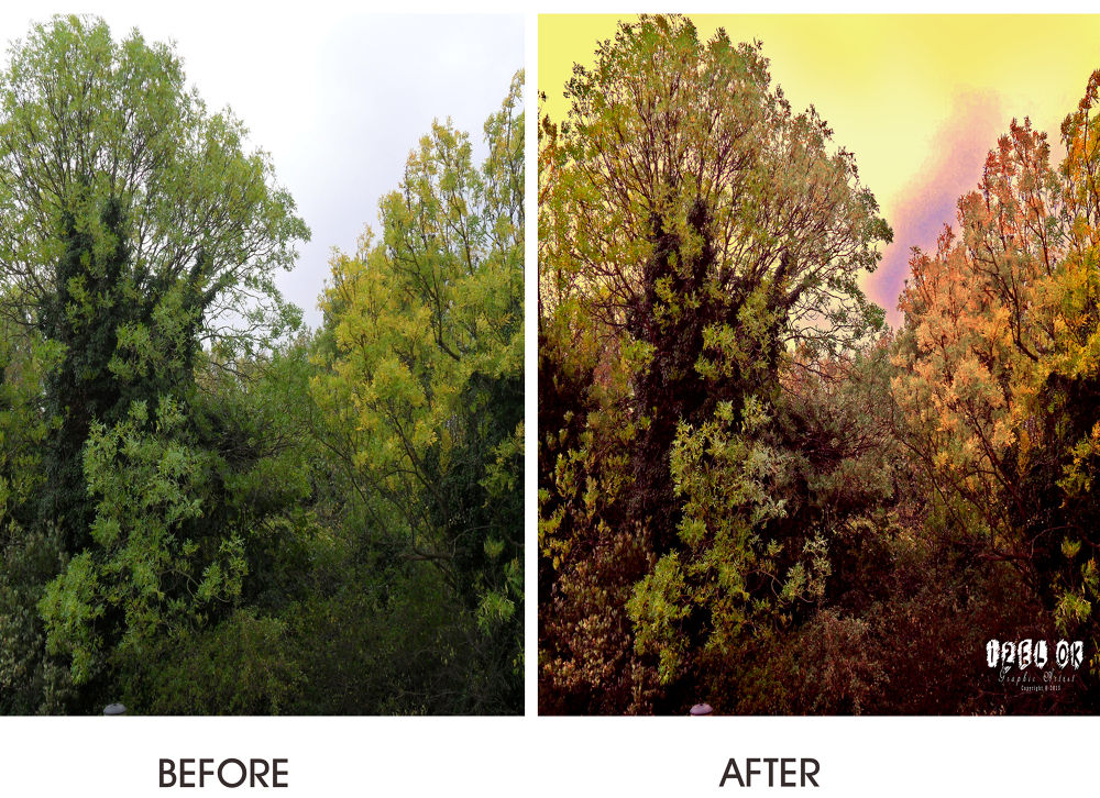 Trees; Before & After - Photograph By: IZ OA 2013 by IZOA