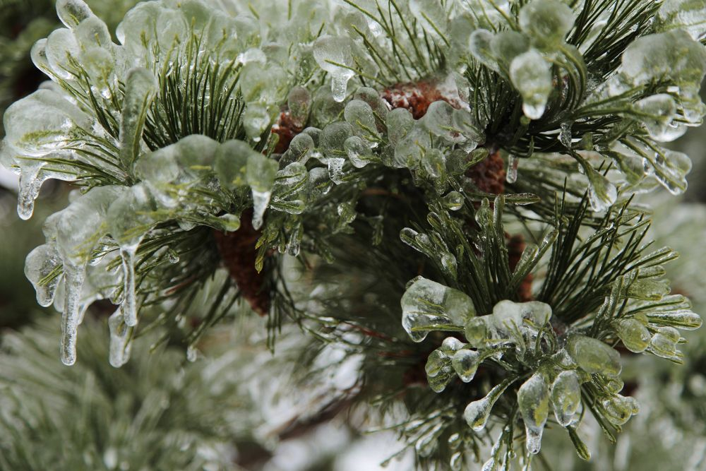 Ontario Ice Storm 6 by Roland Lavigne