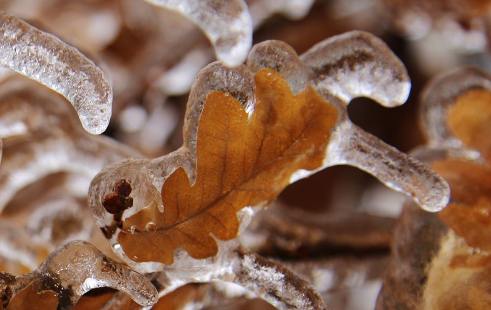 Ontario Ice Storm 4 by Roland Lavigne