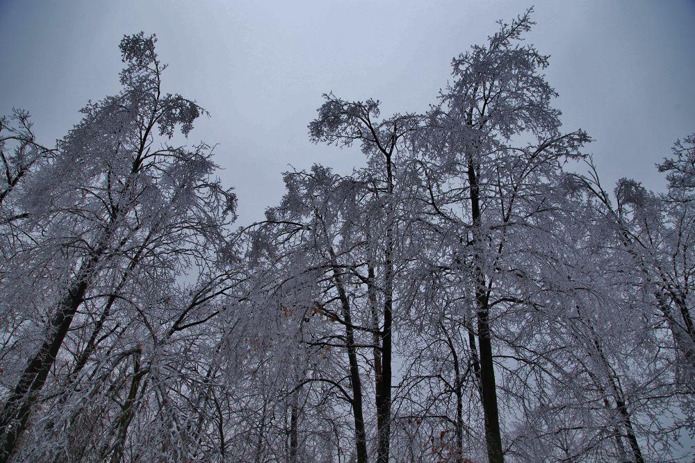 Ontario Ice Storm 11 by Roland Lavigne