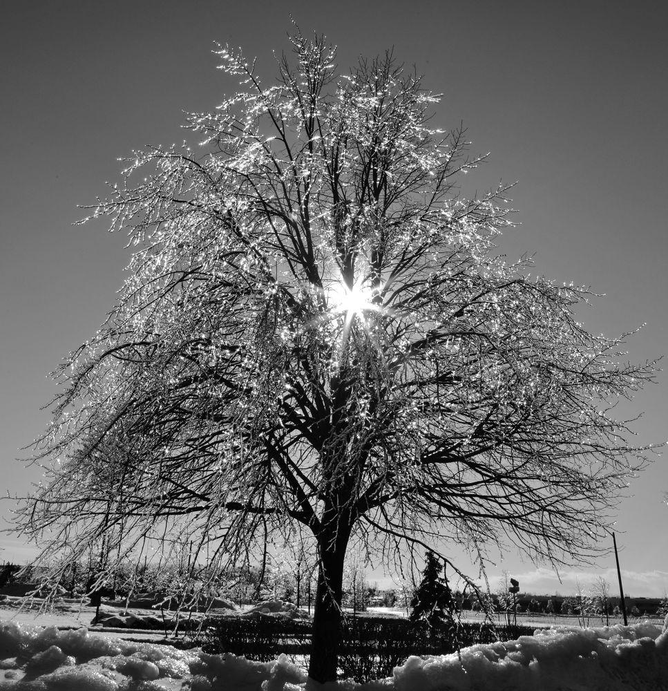 Sun Ice... by Roland Lavigne