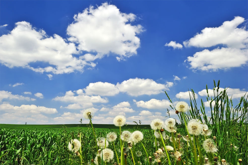 Spring Time by Daniel J Bellyk