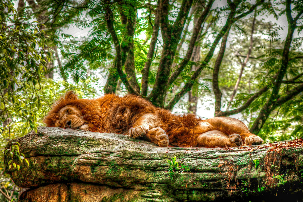 Nap time by danny
