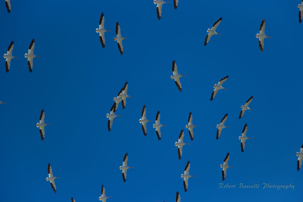 Puerto Penasco's Air Force by RobertBascelli