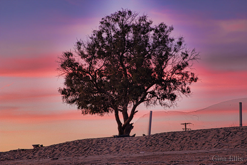 Lonesome tree on the beach by Ginaellis
