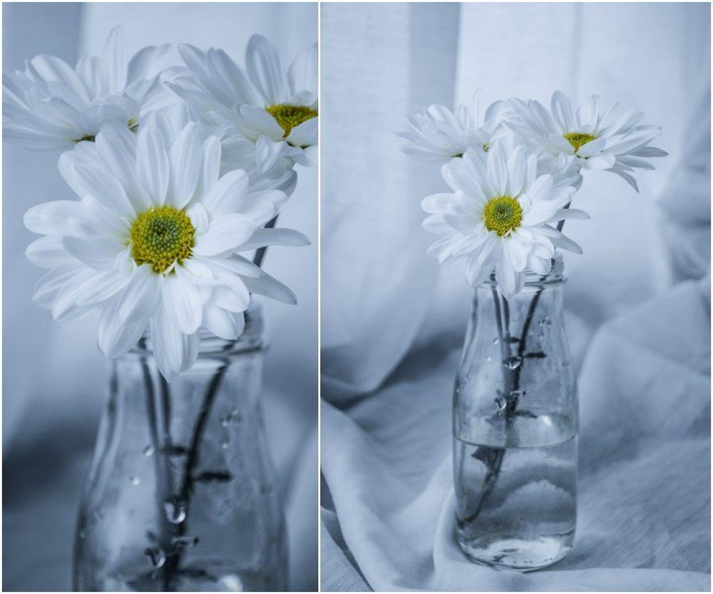 Pure white by Cutiamoon
