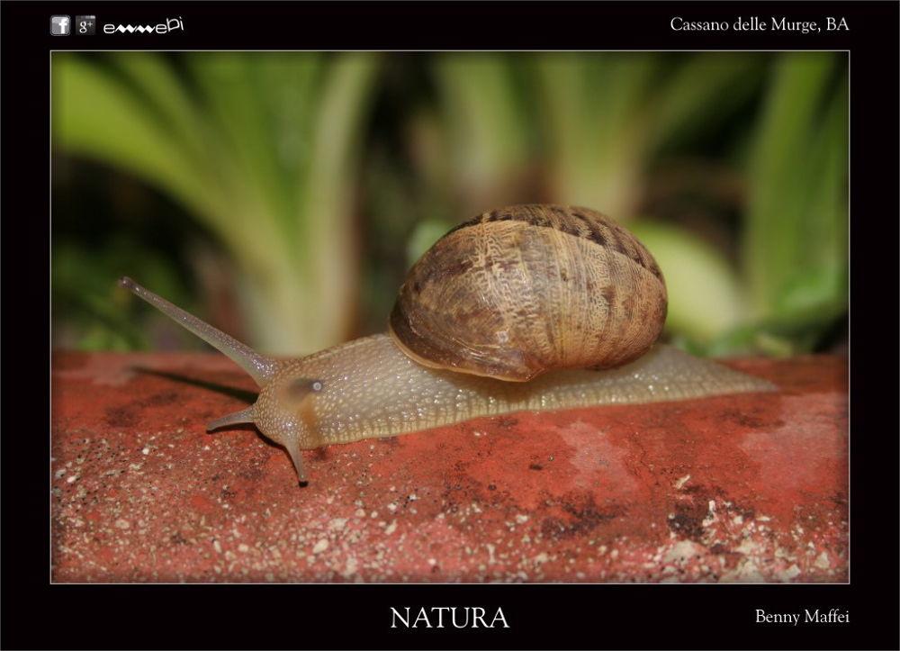 001-NATURA Lumaca by bemaffei