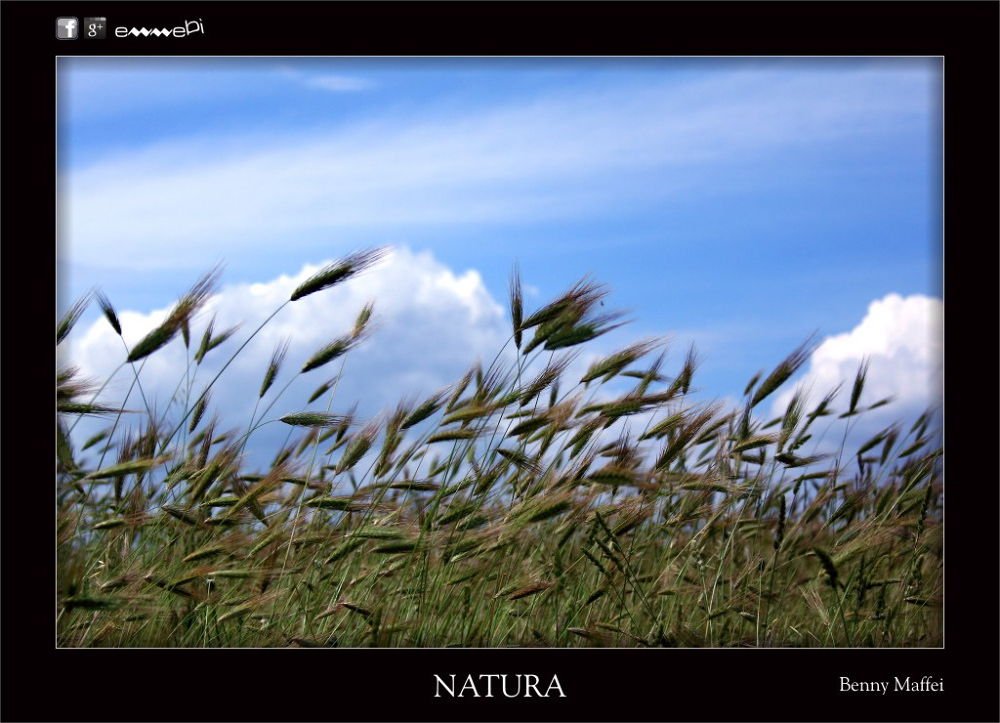 054-NATURA Spighe by bemaffei